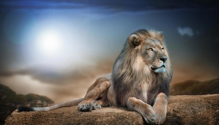 king-judah